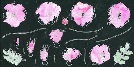Black Board Background. Watercolor Wild Rose Pink Flower. Dog Rose, Briar Leaf. Botanical Painting. Realistic Hand Drawn Illustration. Savoyar Doodle Style
