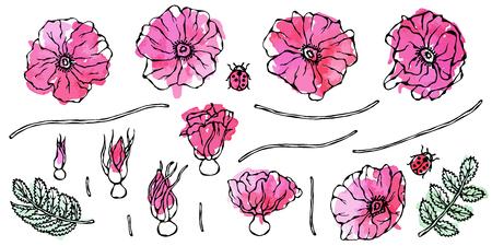 Watercolor Wild Rose Pink Flower. Dog Rose, Briar Leaf. Botanical Painting. Realistic Hand Drawn Illustration. Savoyar Doodle Style Stockfoto - 102405227