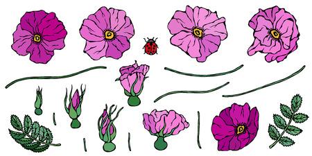 Wild Rose Pink Flower. Dog Rose, Briar Leaf. Botanical Painting. Realistic Hand Drawn Illustration. Savoyar Doodle Style. Stock Illustratie