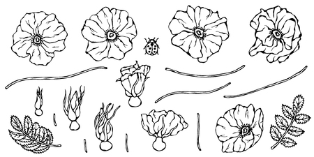 Wild Rose Flower. Dog Rose, Briar Leaf. Botanical Painting. Realistic Hand Drawn Illustration. Savoyar Doodle Style.