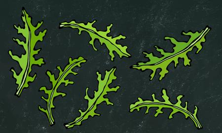 Black Board Background. Set of Arugula Rucola, Rocket Salad Fresh Green Leaves. Aromatic Herb. Fresh Cooking Salad Ingredient. Hand Drawn Illustration. Savoyar Doodle Style