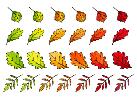 Autumn Leaves Set. Rowan, Oak, Hawthorn. Autumn or Fall Harvest Collection. Realistic Hand Drawn High Quality Vector Illustration. Doodle Style Vectores