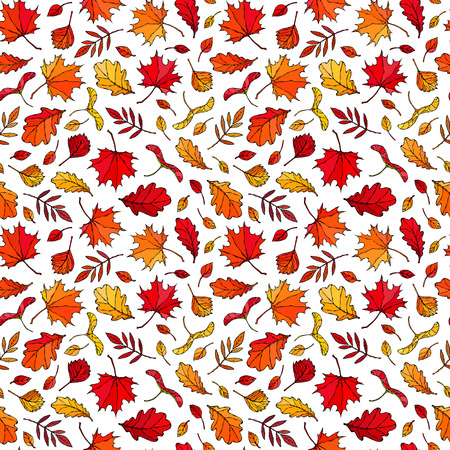 Seamless Endless Pattern of Autumn Leaves. Maple Rowan, Oak, Hawthorn, Birch. Red, Orange and Yellow. Realistic Hand Drawn High Quality Vector Illustration. Doodle Style Vectores