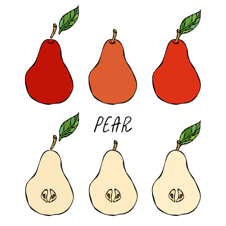 Red Pear and Leaf. Fresh Fruit Nutrition Diet. Autumn or Fall Vegetable Harvest Collection. Realistic Hand Drawn High Quality Vector Illustration. Doodle Style Illustration