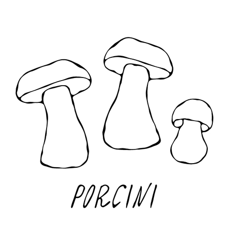 Porcini mushrooms or Boletus Edulis, Penny Bun, Cep, Porcino. Autumn or Fall Harvest Collection. Realistic Hand Drawn High Quality Vector Illustration. Doodle Style