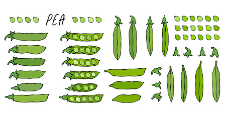 Peeled Green Pea Pod. Big Set. Healthy Bio Vegetarian Food. Realistic Hand Drawn High Quality Vector Illustration. Doodle Style.
