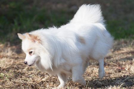companionship: Precioso perro