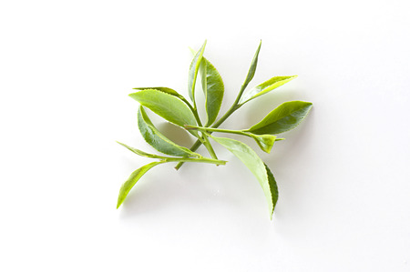 plantation: Tea leaves on a white background