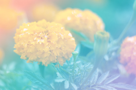 filtered: beautiful flowers with Soft Focus Color Filtered background