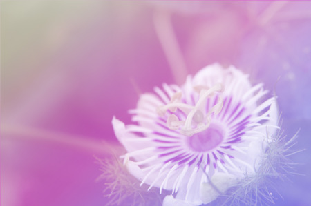 colorize: beautiful flowers with Soft Focus Color Filtered background