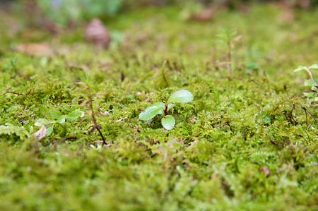with moss: Moss Stock Photo