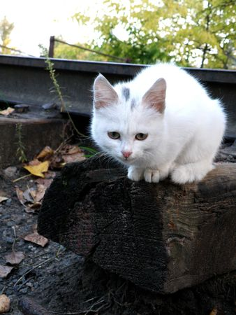 cross ties: Sweet small kitten in cold autumn day sits on wet cross ties Stock Photo