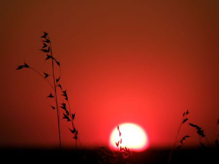 Wild grass growing in the meadows against a red sunset photo