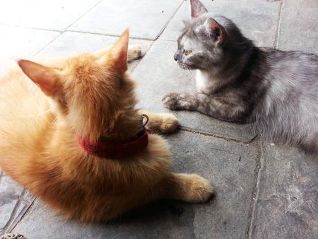 gray cat: orange cat and gray cat Stock Photo