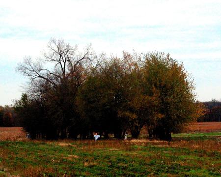 shrubbery on a farm