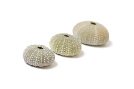 fossilized: Fossilized sea urchins isolated on white Stock Photo