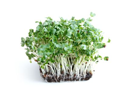 Water cress on a background Stock Photo - 6115599