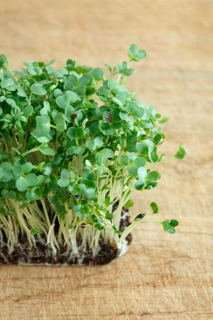 water cress: Water cress on a background