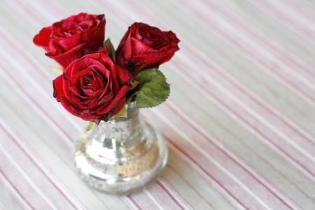 Roses photo