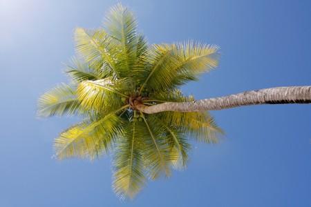 Palm tree Stock Photo - 6941252