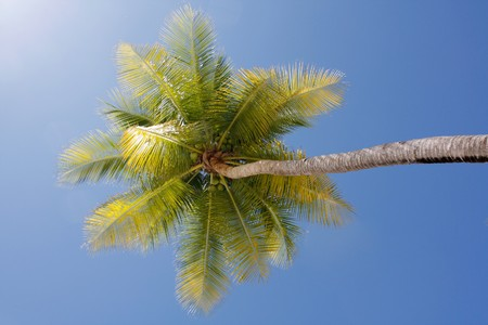 Palm tree Stock Photo - 6941252