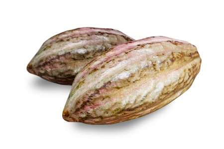 cocoa bean: Cocoa fruit