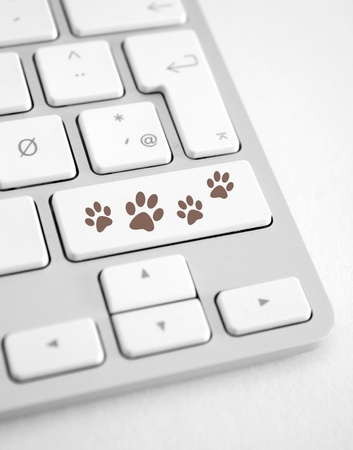 Dog footprints Stock Photo