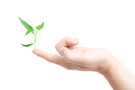 Finger supporting a new plant Stock Photo - 8534789