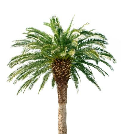 Palm tree Stock Photo - 9462563