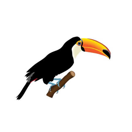 birdlife: toucan isolated on white background Illustration