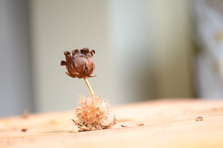 dried flowers: Dried flowers wither