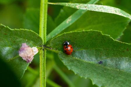 Ladybug on a leaf Zdjęcie Seryjne