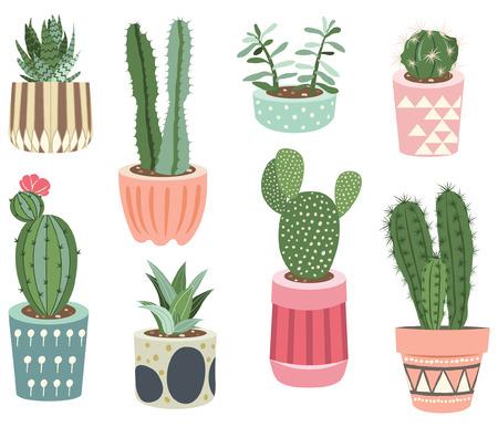 collections de cactus