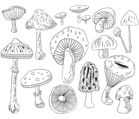 Hand Draw Mushroom Collections