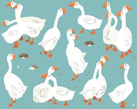 White Goose Bird Animal Species Collections 일러스트