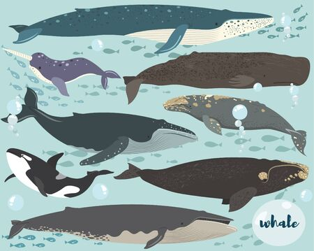 A vector of Whale Species Collection Set
