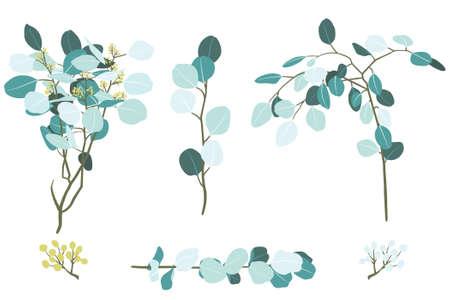 Vector Illustration of Eucalyptus Foliage Branch Elements