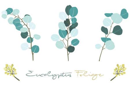 Eucalyptus Foliage Branch Vector Illustration Set