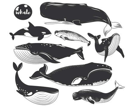 Doodle Marine Animal Whale Species Collections 일러스트