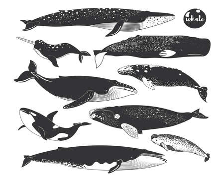 Doodle Cute Marine Animal Whale Species Elements 일러스트