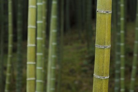 Green bamboo forest in Arashiyama, Kyoto, Japan Stock Photo