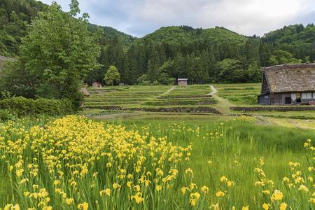gokayama: Idyllic landscape of Historical village of Shirakawa-go. Shirakawa-go is one of Japans Sites located in Gifu Prefecture, Japan.
