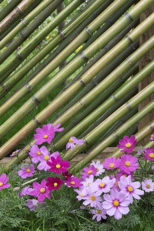 Bamboo fence in flower garden Stock Photo