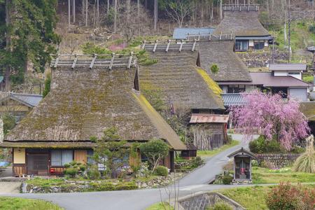 Sakura flower tree blossom in historical village Miyama in Kyoto, Japan 写真素材 - 115995769
