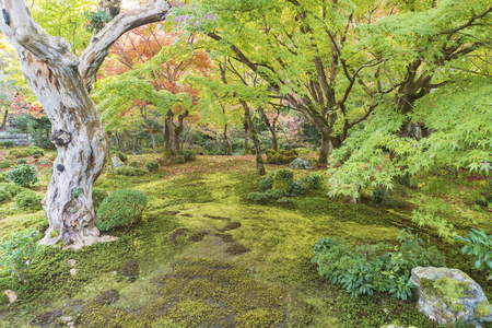 idyllic green garden scenery