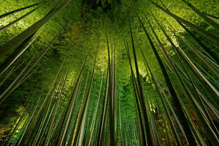 Bosque de bambú, bosque de bambú en Arashiyama, Kyoto, Japón