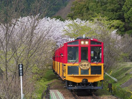 Kyoto, Japan - April 06, 2016 : Sakano Romantic Train, a sightseeing retro train that runs along mountain pass through sakura flower tunnel in Arashiyama, Japan Redactioneel