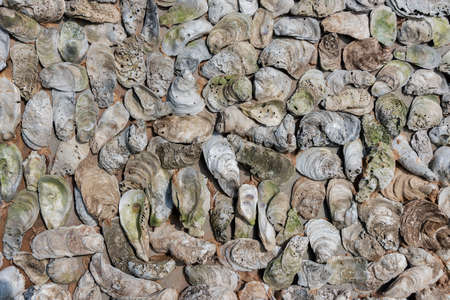 Texture of oyster shells on the wall. Background from mollusk shells embedded in stucco