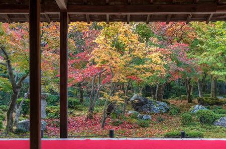 idyllic garden in Zuiganzan Enkouji Temple, Kyoto, Japan in autumn season 스톡 콘텐츠