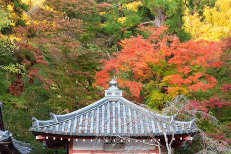 Details of rooftop of historical architecture and red maple leaves in Kyoto, Japan in autumn season 스톡 콘텐츠